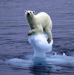 20090626200710-oso-esperando.jpg